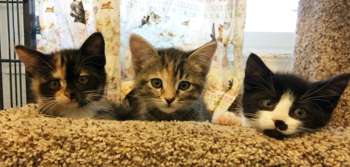 Kittens at CAReS
